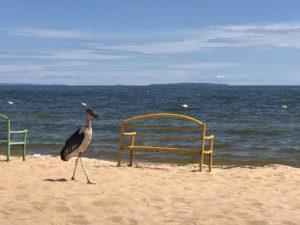 Marabu Viktoriasee Spennah Beach Entebbe