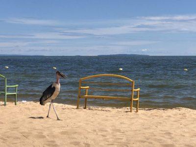 Marabu am Spennah Beach Entebbe