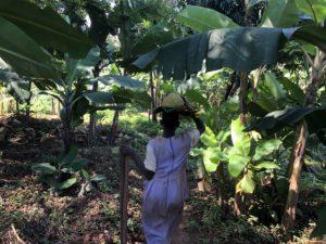 Uganda Plantage Landwirtschaft