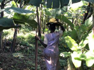 Frau in Uganda Plantage Landwirtschaft