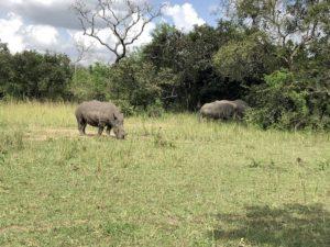 Rhinos Ziwa Rhino Sanctuary