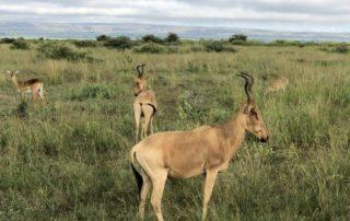 Safari Murchison Falls National Park