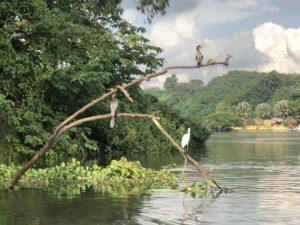Weißer Nil Jinja & Seevögel